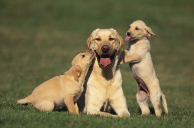 Köpek Eğitim Kurumları