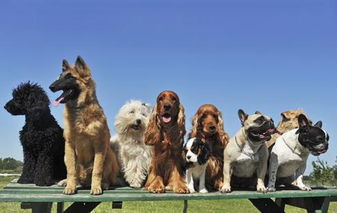 Köpek Eğitirken Dikkat Edilmesi Gerekenler