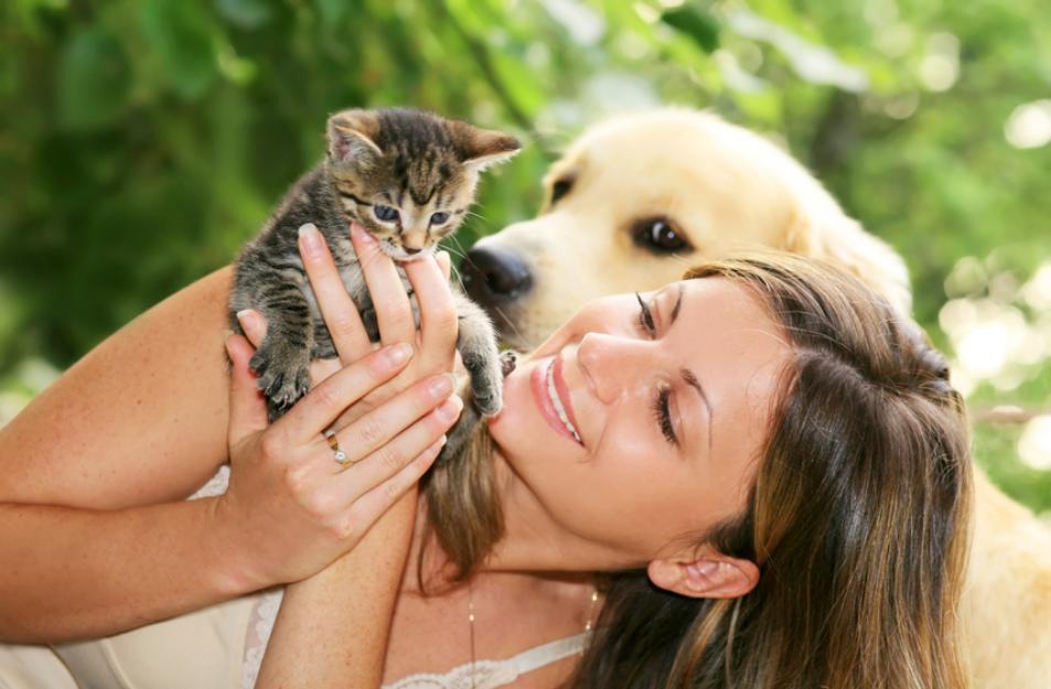 Köpek Eğitimi Jack Russell Terrier
