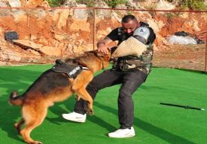 Köpek Eğitimi Uzmanı