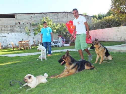 Köpek Eğitimi Çatalca