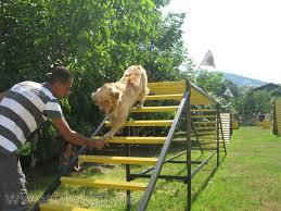 Cane Corsa Köpek Eğitimi
