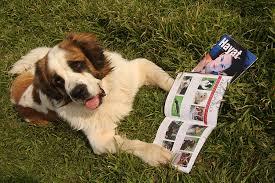 Arnavutköy Köpek Eğitim Merkez