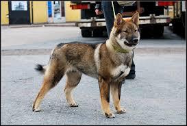 Köpek Eğitimi Belgeseli