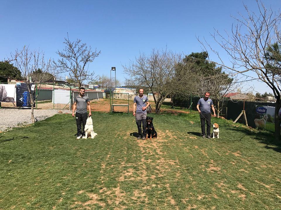 Great Dane Köpek Eğitimi