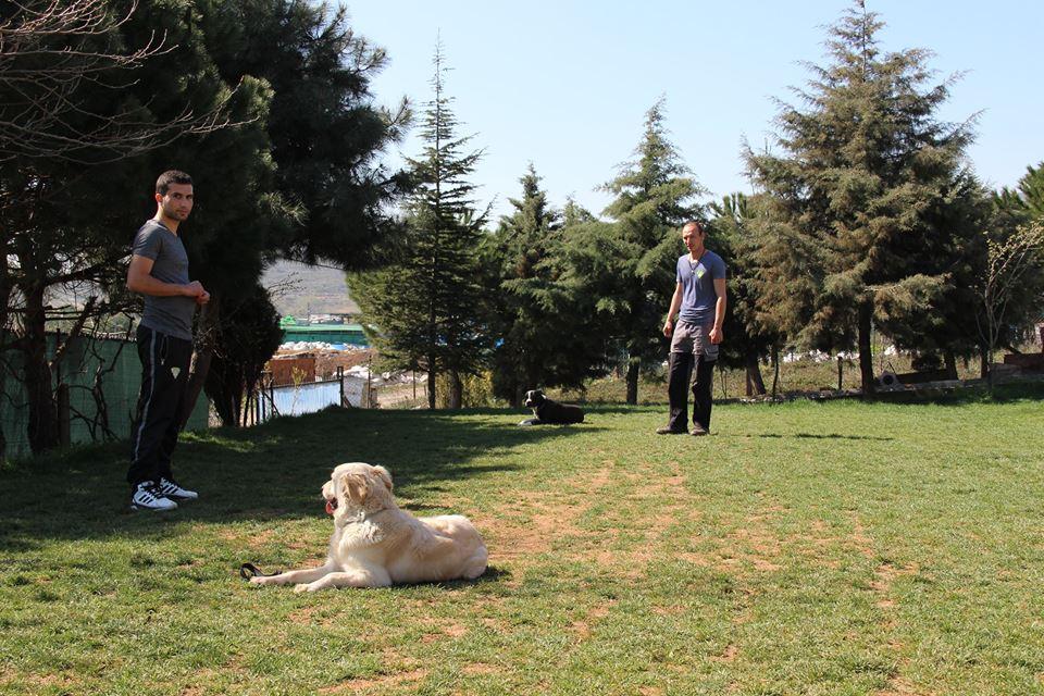 Köpek Eğitimi Vonjuliet