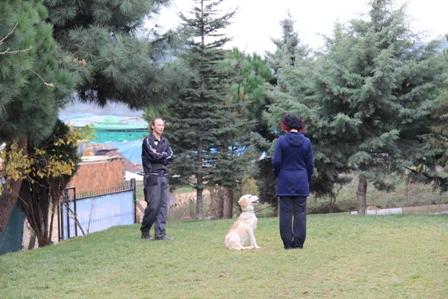Köpek Eğitimi Newfoundland