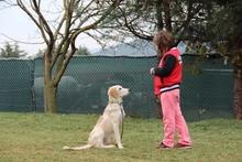 Başakşehir Köpek Eğitimi
