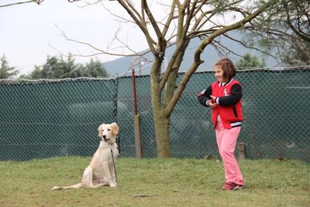 Zeytinburnu Köpek Eğitim Çiftliği istanbul