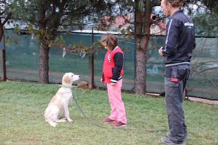 İstanbul Kağıthane Köpek Eğitim Merkezi