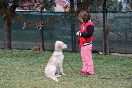 AmericanCocker Köpek Eğitimi Eğitmeni