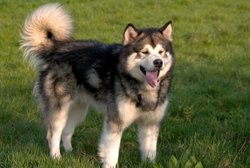 Bayrampaşa Köpek Eğitim Çiftliği
