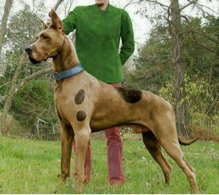 Köpek Eğitimi Eyüp
