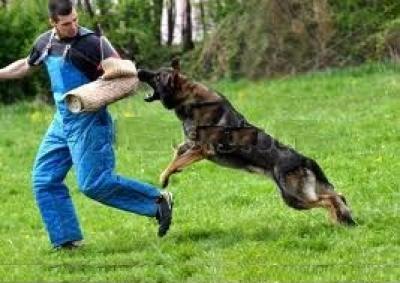Köpek Eğitim Güvencesi