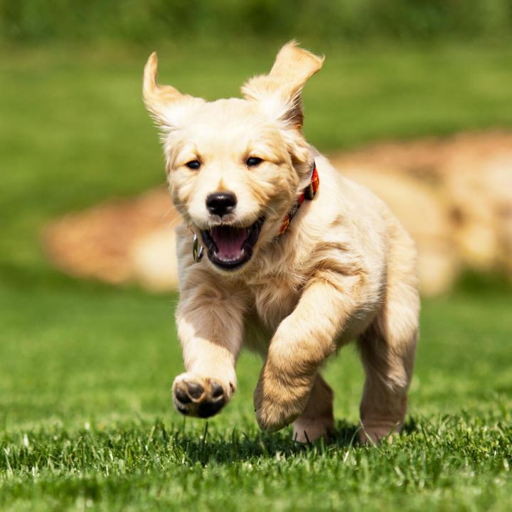 2 Aylık Köpek Eğitimi