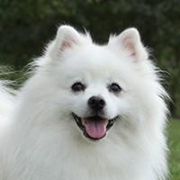 Bayramoğlu Köpek Eğitimi