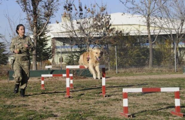 Beylikdüzü Köpek Eğitim Merkezi
