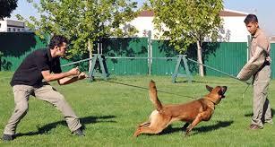 Köpek Eğitimi Kadıköy