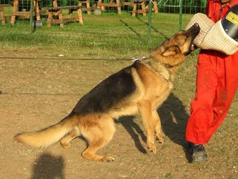 Agresif Köpek Eğitimi