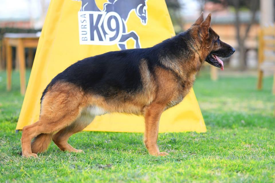 Köpek Eğitim Çiftlikleri