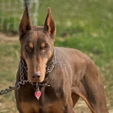 Avcılar Köpek Eğitim Çiftliği