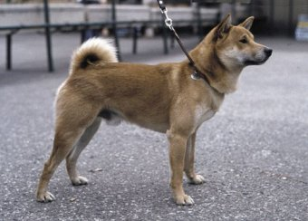 köpek eğitimi başlangıç