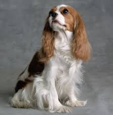 Güvenilir Köpek Otelleri
