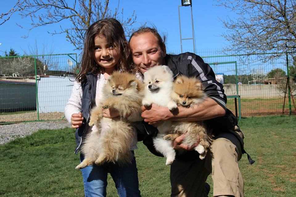 Köpek Eğitimi Labrador