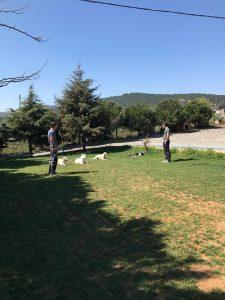 Köpek Eğitimi Çekmeköy Adresi