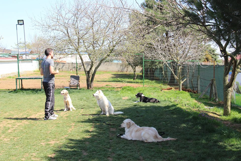 Köpek Eğitimi Beykoz