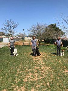 Sancaktepe Köpek Eğitimi