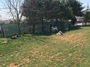 Sancaktepe Köpek Eğitim  Merkezi