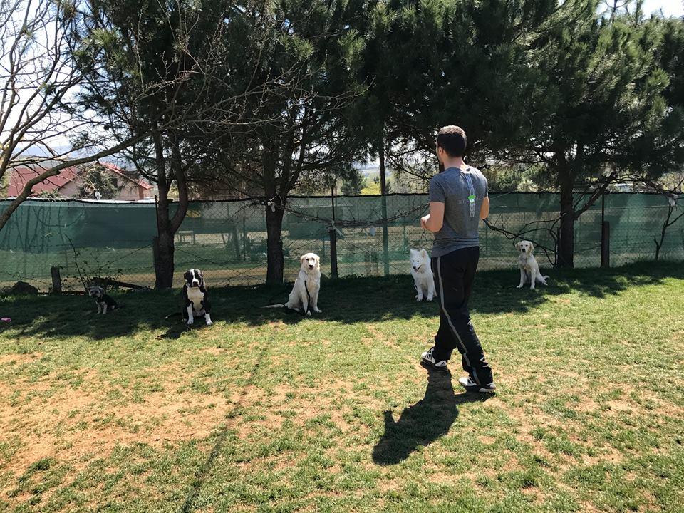 Bahçelievler Köpek Eğitim Çiftliği