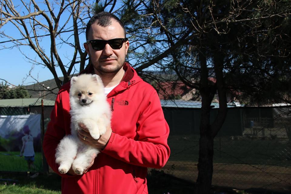 Köpek Eğitimi Beagle Satılık Beagle