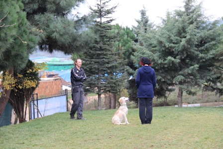 German Pinscher Köpek Eğitimi