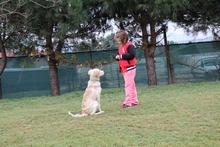 Sultangazi Köpek Eğitim Merkezi