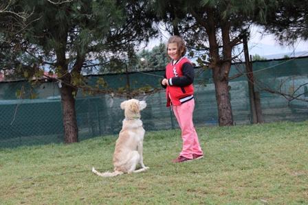 Darıca Köpek Eğitimi