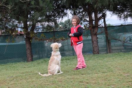 istanbul Kartal Köpek Eğitim Merkezi