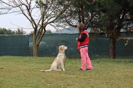 istanbul Küçükçekmece Köpek Eğitim Merkezi