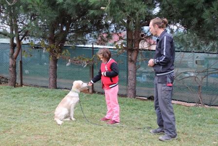 Avcılar Köpek Eğitim Merkezi