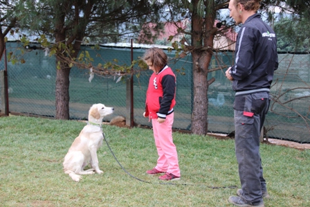Güngören Köpek Eğitim Çiftliği