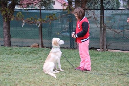 istanbul Okmeydanı Köpek Pansiyonu